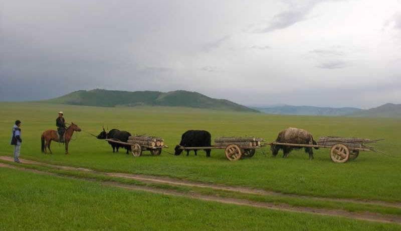 amicus reisen mongolei