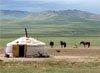 Amicus mongolei reisen